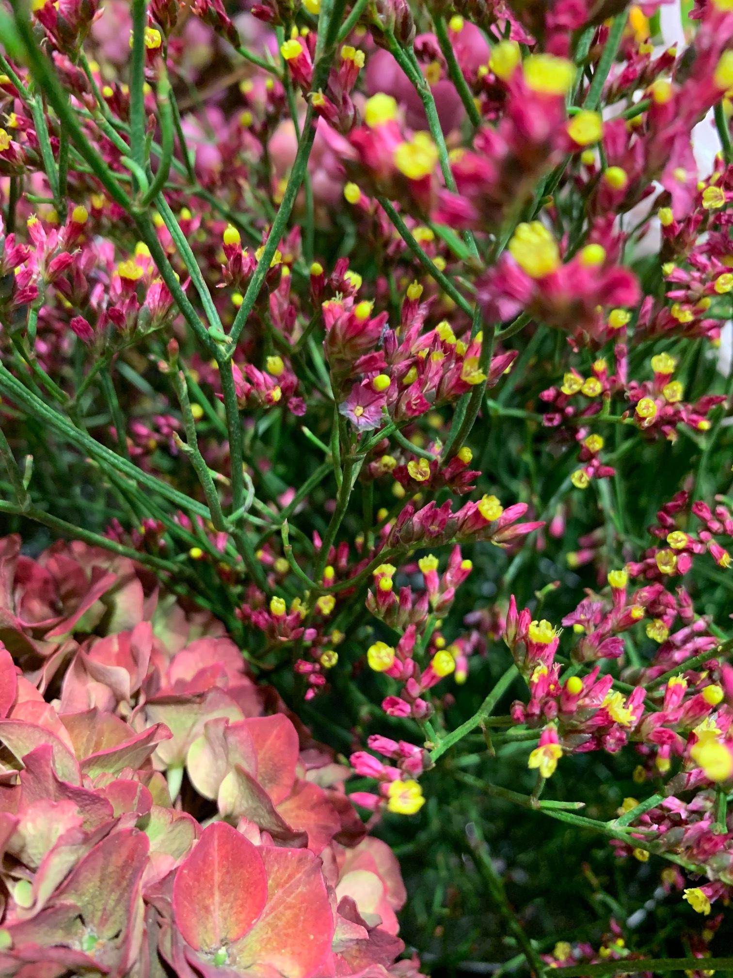 fleurs saison